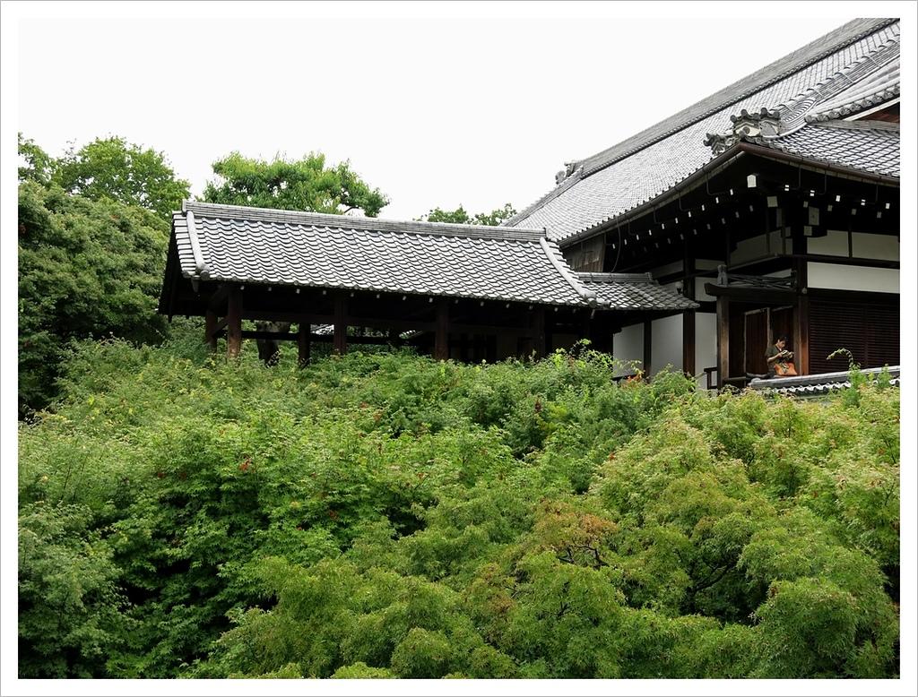 2017-06-21 東福寺:IMG_6893.JPG