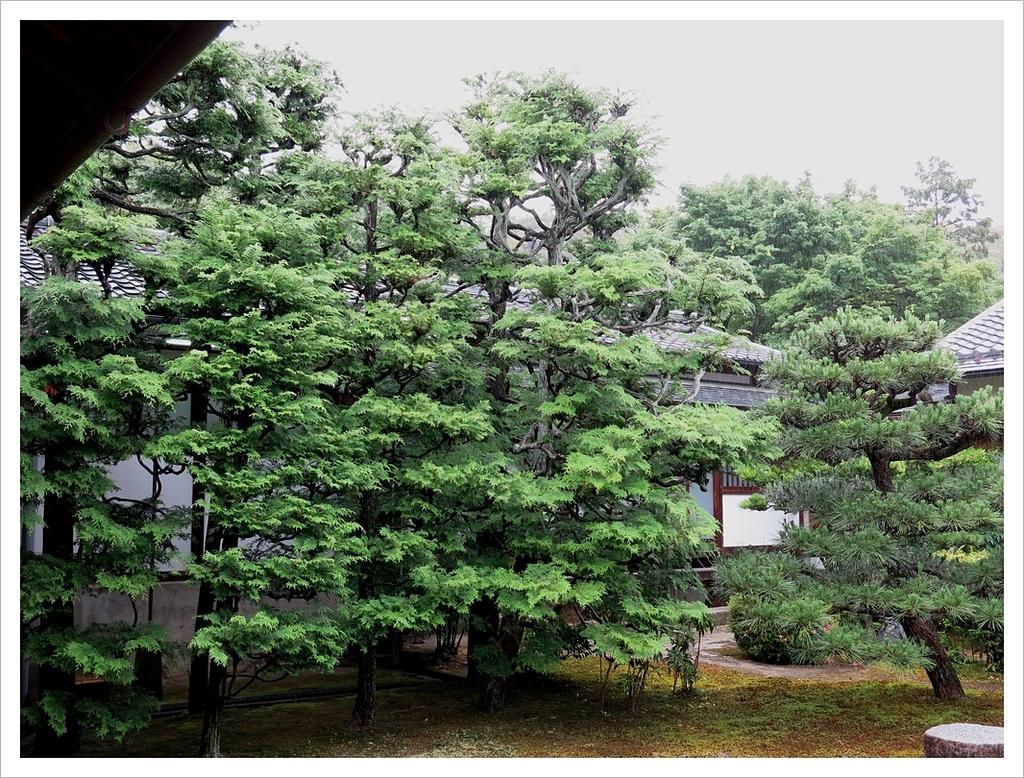 2017-06-21 東福寺:IMG_7064.JPG