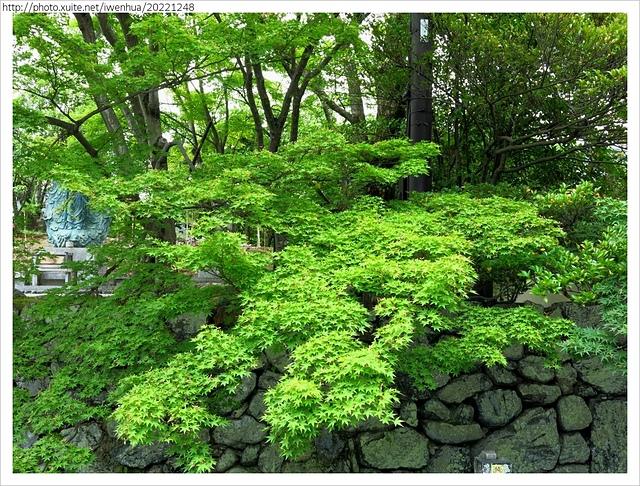 IMG_6327.JPG - 2017-06-18 嵐山-天龍寺-竹林