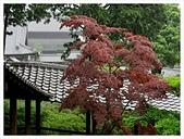 2017-06-21 東福寺:IMG_7019.JPG