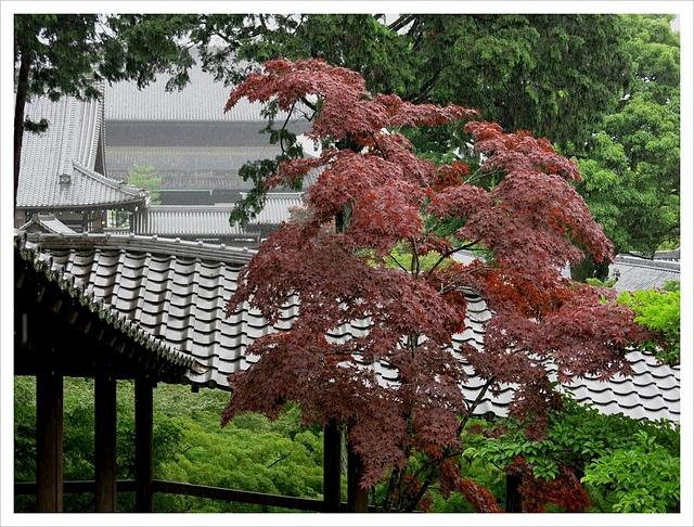 IMG_7019.JPG - 2017-06-21 東福寺