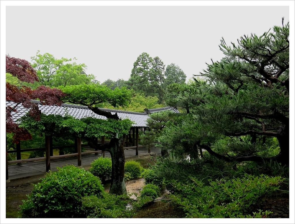 2017-06-21 東福寺:IMG_7023.JPG