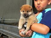 葵の龍×櫻姬号幼犬99年9月1日生:葵の龍×櫻姬号幼犬99年9月1日生