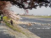 2014年3月25日櫻花日本之旅:IMG_20140408_150111.jpg