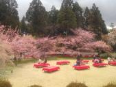 2014年3月25日櫻花日本之旅:IMG_20140406_122512.jpg