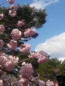 2014年3月25日櫻花日本之旅:IMG_20140406_135313.jpg