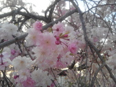 2014年3月25日櫻花日本之旅:IMG_20140409_180916.jpg