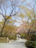 2014年3月25日櫻花日本之旅:IMG_20140408_111711.jpg