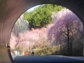 2014年3月25日櫻花日本之旅:IMG_20140411_152616.jpg