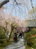 2014年3月25日櫻花日本之旅:IMG_20140408_112617.jpg