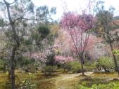 2014年3月25日櫻花日本之旅:IMG_20140408_124622.jpg