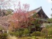 2014年3月25日櫻花日本之旅:IMG_20140408_124728.jpg