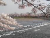 2014年3月25日櫻花日本之旅:IMG_20140408_145811.jpg