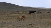 北疆:北疆7-野馬.JPG