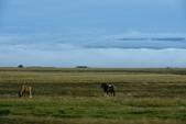 【北歐旅記】冰島-往塞里雅蘭瀑布Seljalandsfoss途中:DSC_7530.JPG