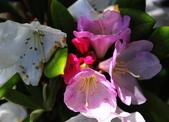 舊金山的一天(二)花園之美--【漫遊美西30日】:_KCF6617.jpg