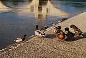 雅維儂風情畫---聖貝內茲橋的足跡-2  (遊法旅記之46):DSC_3537.jpg