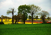 布列塔尼的田園之美 (法國遊蹤之6) :DSC_0426.jpg