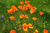 舊金山的一天(二)花園之美--【漫遊美西30日】:_KCF6626.jpg
