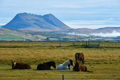 【北歐旅記】冰島-往塞里雅蘭瀑布Seljalandsfoss途中:DSC_7523.JPG