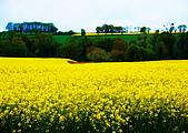 布列塔尼的田園之美 (法國遊蹤之6) :DSC_0347.jpg