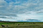 【北歐旅記】冰島-令人震撼的Gullfoss(古佛斯瀑布)一:DSC_7339.JPG