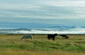 【北歐旅記】冰島-往塞里雅蘭瀑布Seljalandsfoss途中:DSC_7510.JPG