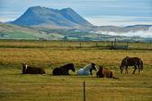 【北歐旅記】冰島-往塞里雅蘭瀑布Seljalandsfoss途中:DSC_7520.JPG