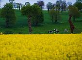 布列塔尼的田園之美 (法國遊蹤之6) :DSC_0350.jpg