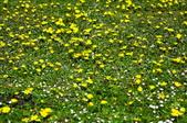 舊金山的一天(二)花園之美--【漫遊美西30日】:_KCF6615.jpg