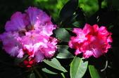舊金山的一天(二)花園之美--【漫遊美西30日】:_KCF6621.jpg