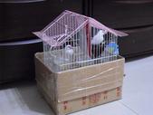 bird:CIMG1988