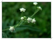 花卉:0.jpg