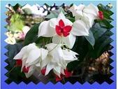 花卉:100_0577-1.JPG