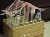 bird:CIMG1985