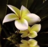 花卉:27.jpg