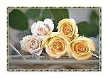 花卉:29-1.jpg