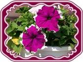 花卉:100_0619.JPG