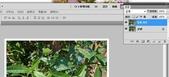 Adobe Photoshop CS5:照片四周加白邊4.jpg