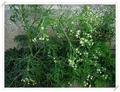 花卉:1-11.jpg