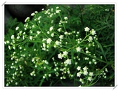 花卉:2.jpg