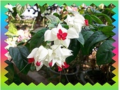花卉:100_0578.JPG