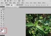 Adobe Photoshop CS5:照片四周加白邊2.jpg