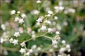 花卉:3616192010.jpg