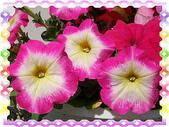 花卉:100_0620-1.JPG