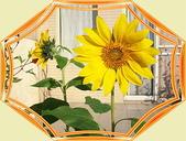 花卉:100_0529-1
