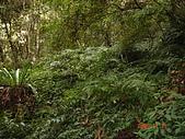 霞喀羅古道:去布努加里山的登山道