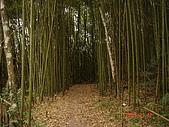 霞喀羅古道:馬鞍附近的桂竹林