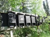 逐湖之旅:森林中的蝙蝠箱