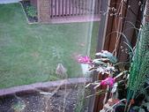 未分類相簿:窗外的兔子